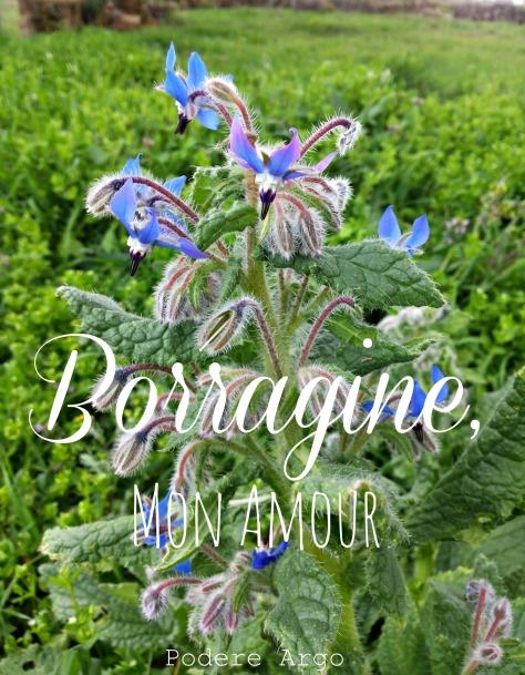 Borraginemonamourx4