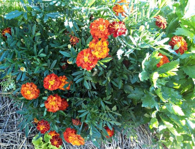 I fiori amici dell'orto
